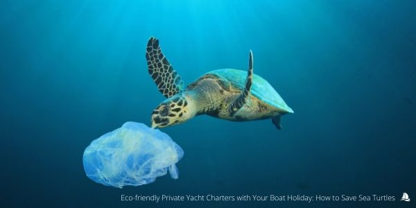 sustainable-boat-charter-marine-turtles-protection