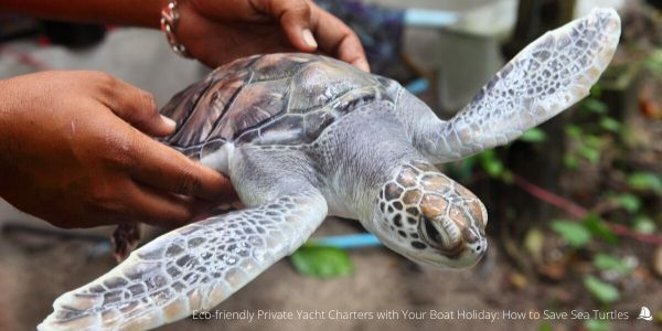 sea-turtles-conservation