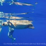marine-turtles-conservation-boat-charter