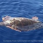 help-sea-turtles-during-your-boat-holiday